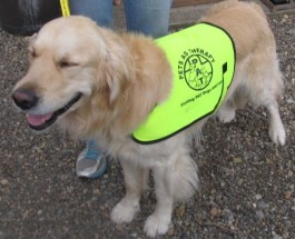 Barney is a PAT dog 002