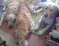 Uncle Jonny, Newman and Barnaby