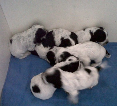 Three weeks old