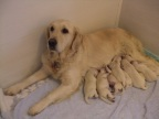 Rosie and her pups