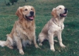 Newman and Willie 5 months