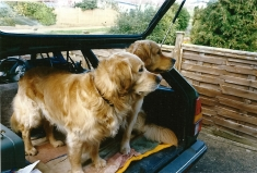 Newman and Willie (2)