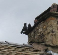 Two_jackdaws_on_an_old_chimney_-_geograph.org.uk_-_1375599