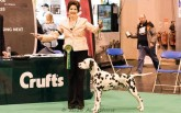 Sally-Ann-at-Crufts-2016-960x600