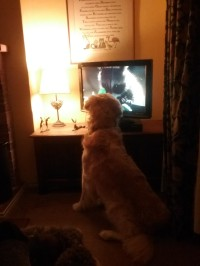 barnaby-watching-attenborough